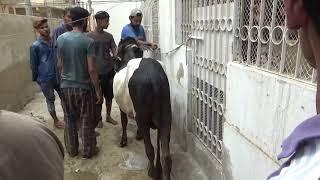 Latest Sohrab Goth Mandi 2018 || Karachi Cow Mandi 2018 Latest  || #mandi2018 #karachimandi
