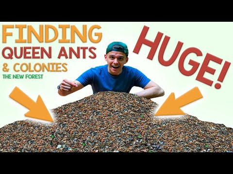 Finding Queen Ants & Colonies | My Trip to the New Forest, UK