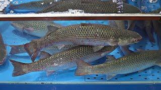 Korean Fish Market - Cutting Live Mullet Fish | Yellow Mullet Sashimi