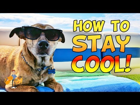 11 Tips for How to Keep a Dog Cool in Summer + Prevent Heatstroke | Hot Weather Dog Care pt 5