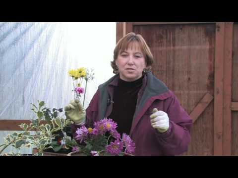 Gardening Tips : Identifying Different Types of Flowers