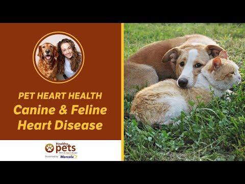 Pet Heart Health - Canine & Feline Heart Disease