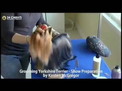 Yorkshire Terrier, Grooming Yorkshire Terrier part 1, Show Preparation, Chanel Bridget