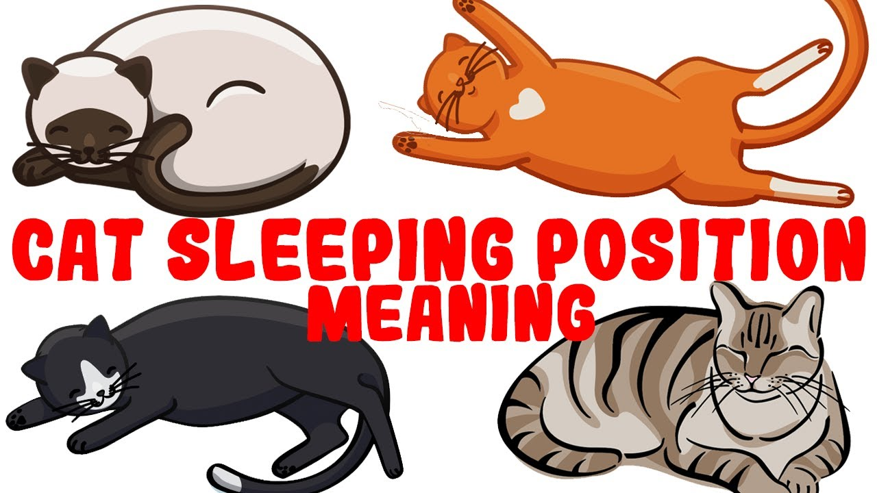 What Your Cat's Sleeping Position Reveals About Their Health and Personality