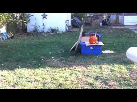 Air Cannon-Dual Shot vs Pumpkin