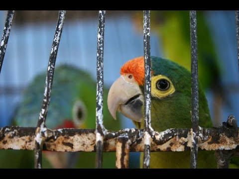 Parrot Cages & Aviaries | Parrot Care