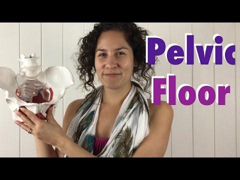 Pelvic Floor: Female Pelvic Floor Anatomy, Function & Dysfunctions