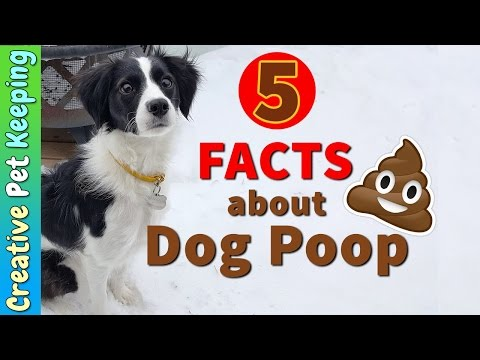 5 FACTS ABOUT DOG POOP | SOOTY PAW PAW - Best Doggy Poop Bags