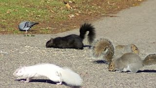 MEOW! Video for Cats to Watch, Squirrels,Rabbits,Pigeons,Chipmunks,