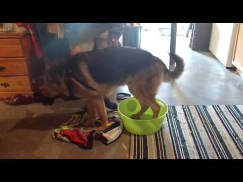 How to teach your dog to clean its paws