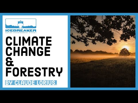 #12 Forests and Global Warming