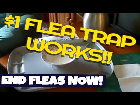 how to make a $1 Homemade Flea trap and end your Flea problems for good.
