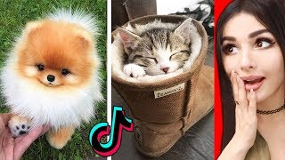 The CUTEST Animals On Tik Tok