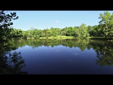 Brief Hiking Tour of the Brumley Forest Nature Preserve - Hillsborough, NC