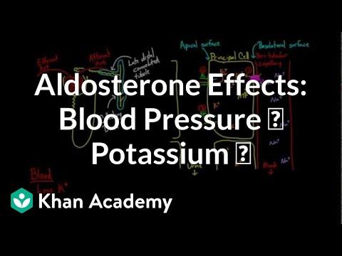 Aldosterone raises blood pressure and lowers potassium | NCLEX-RN | Khan Academy