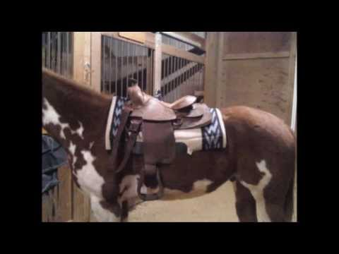 All Around Western Saddle for Sale