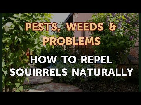 How to Repel Squirrels Naturally