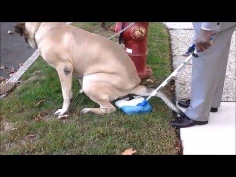 Portable POOP Dog Stool.. VIDEO- ILLUSTRATION