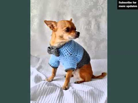 Crochet Dog Jackets Set Of Picture Collection Ideas | Crochet Dog Jackets