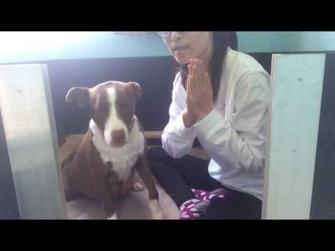 Simple Massage Techniques For Pregnant Dogs