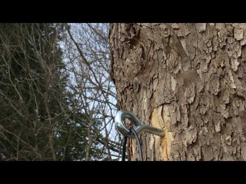 Deer Fence Installation: Tree as a Post