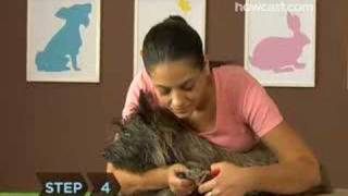 How To Trim Your Dog S Nails