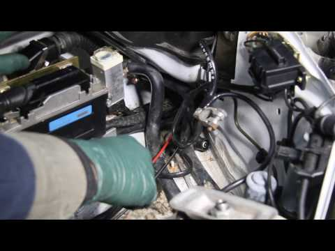 Mice Damage in Your Engine Compartment and How to Prevent It!