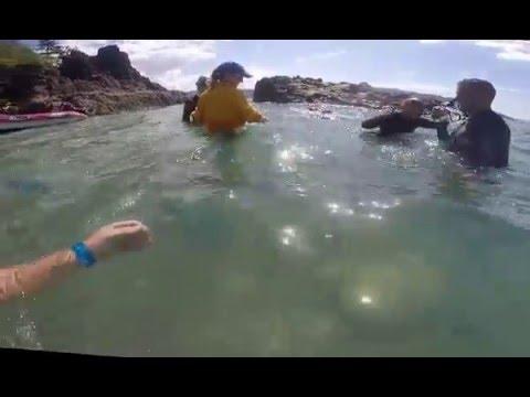 DayDream Island Whitsundays Islands Australia Queensland Jan 2016