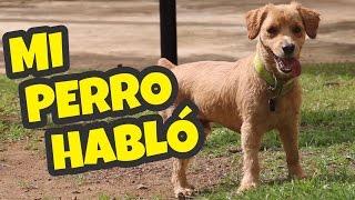 Daniel El Travieso - Si Los Perros Hablaran.
