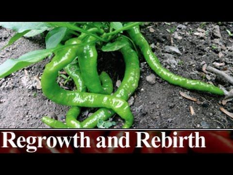 Regrowth and Rebirth