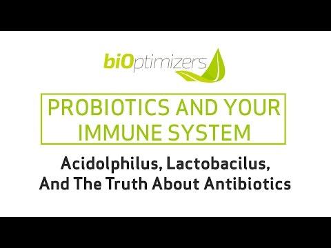 Probiotics And Your Immune System: Acidophilus, Lactobacilus, And The Truth About Antibiotics