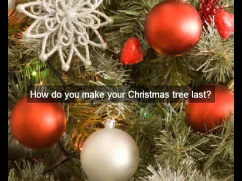 Buy | Real | Christmas trees for sale | NZ | Christmas tree sale | local Christmas tree delivery