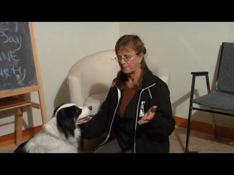 Dog Care & Training : How to Stop Dogs From Shedding