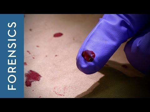 Analysing forensic evidence | The Laboratory