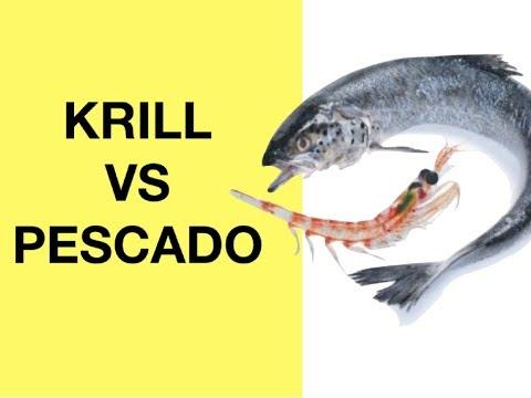 Aceite de Krill vs Aceite de Pescado (Grasas Omega 3 Beneficios)