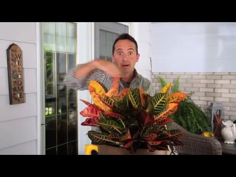 When should you move your outdoor plants indoors