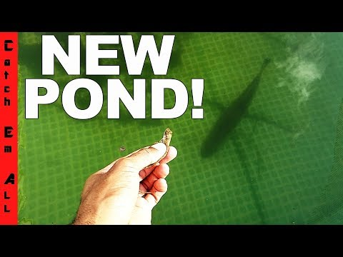 NEW POND! Big ANNOUNCEMENT! and Koi Check