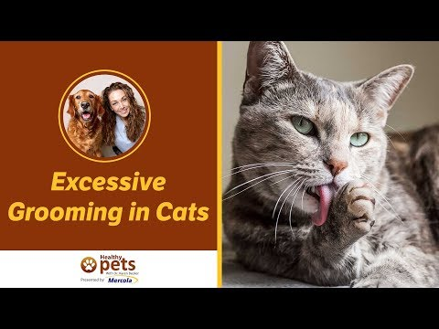 Dr. Becker Discusses Excessive Grooming in Cats