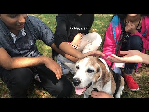 Exchange Students Meet Domesticated Dogs for the First Time