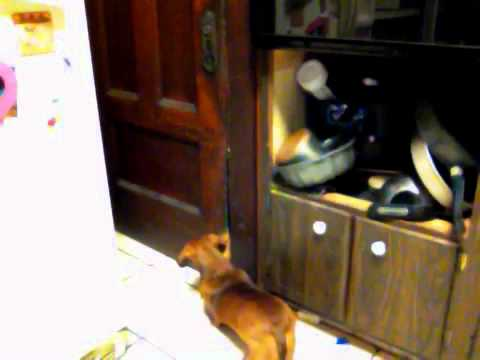 ROSIE THE SILLY DOG SCRATCHING AND BITING THE DOOR TO GET I