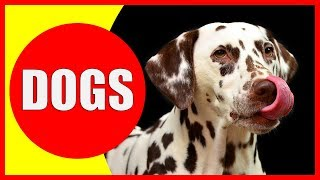 Dogs for Kids - Facts and Information about Dogs for Children - All about Dogs | Dog Videos