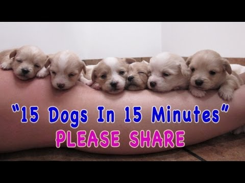 They Went to the Shelter to Rescue 6 Puppies - But Watch What Happens When They Get There