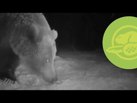 Bear safety tips - Waterton Lakes National Park