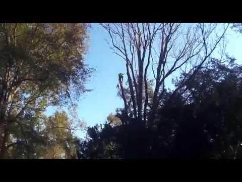 073 limb down precarious