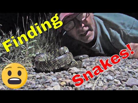 ✅Field Herping Adventure (looking for snakes)!