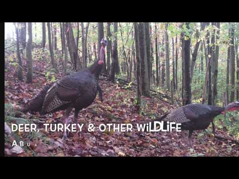 Kentucky Hunting & Recreational Land NO RESERVE AUCTION