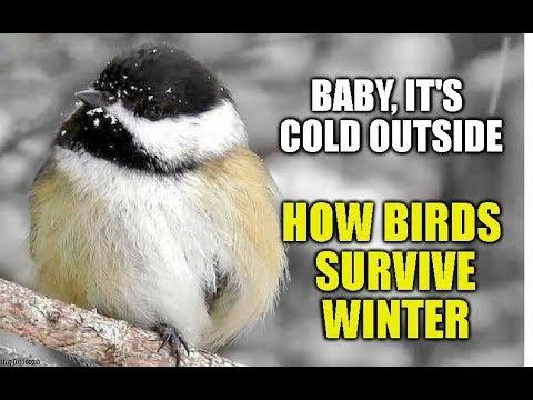 How Birds Survive Winter
