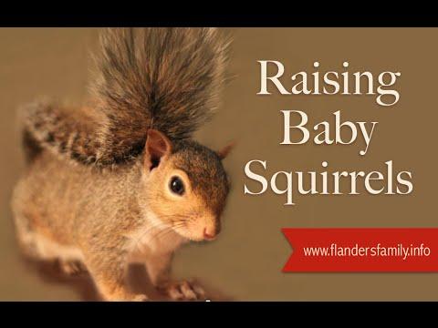Raising Baby Squirrels