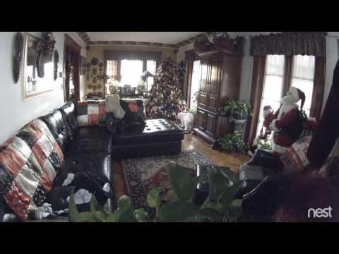 Dog urinates on Christmas tree