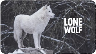The Power Of Being A Lone Wolf